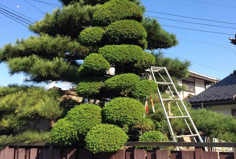 木の剪定 イメージ写真