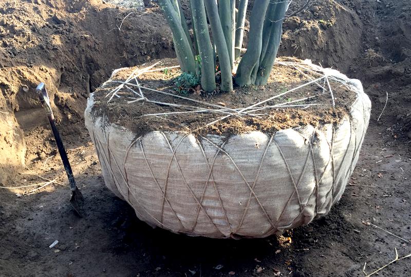 木の植え替え イメージ写真