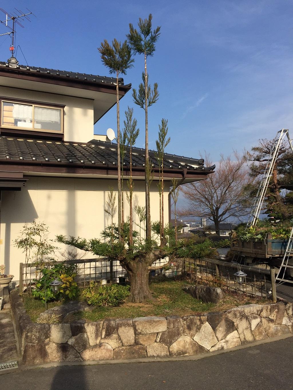 daisugi-tatigi-cut-2017-03-30-20-47-56