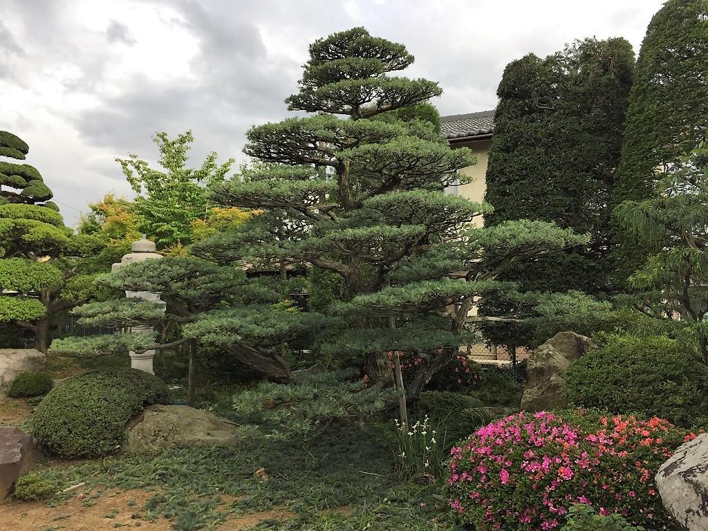naganoshi-goyoumatsu-1-2017-06-08-21-45-01