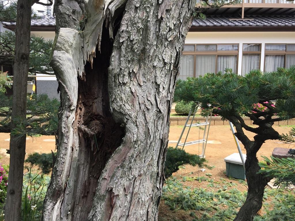naganoshi-goyoumatsu-2017-06-08-10-13-09
