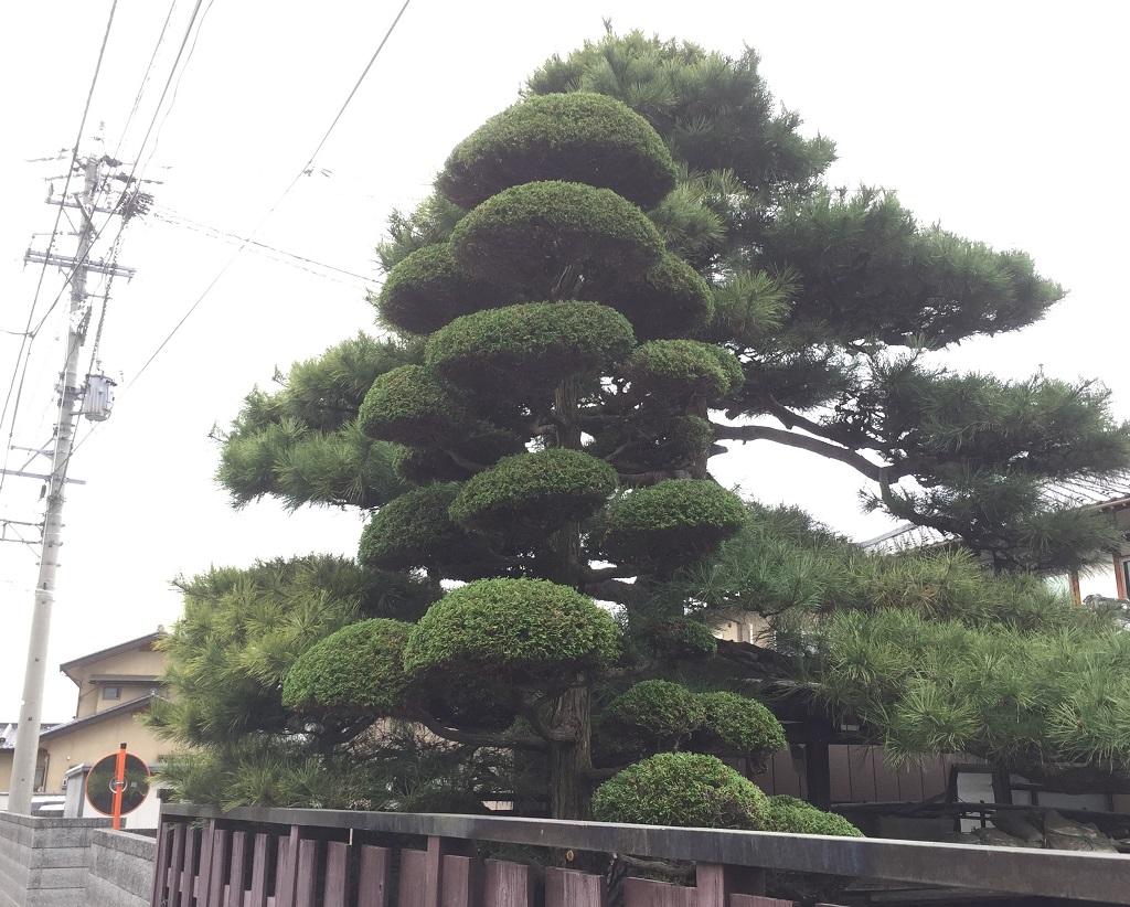 nagano-tyabohiba-after