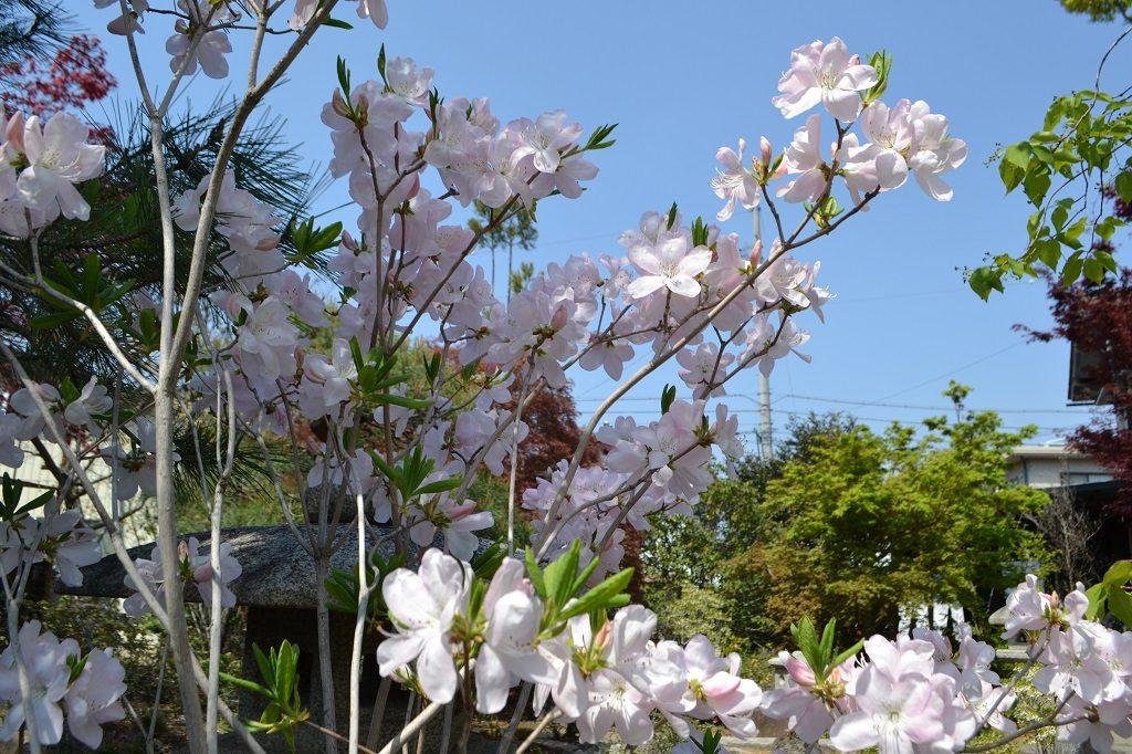nagano-kurohunetsutsuzi