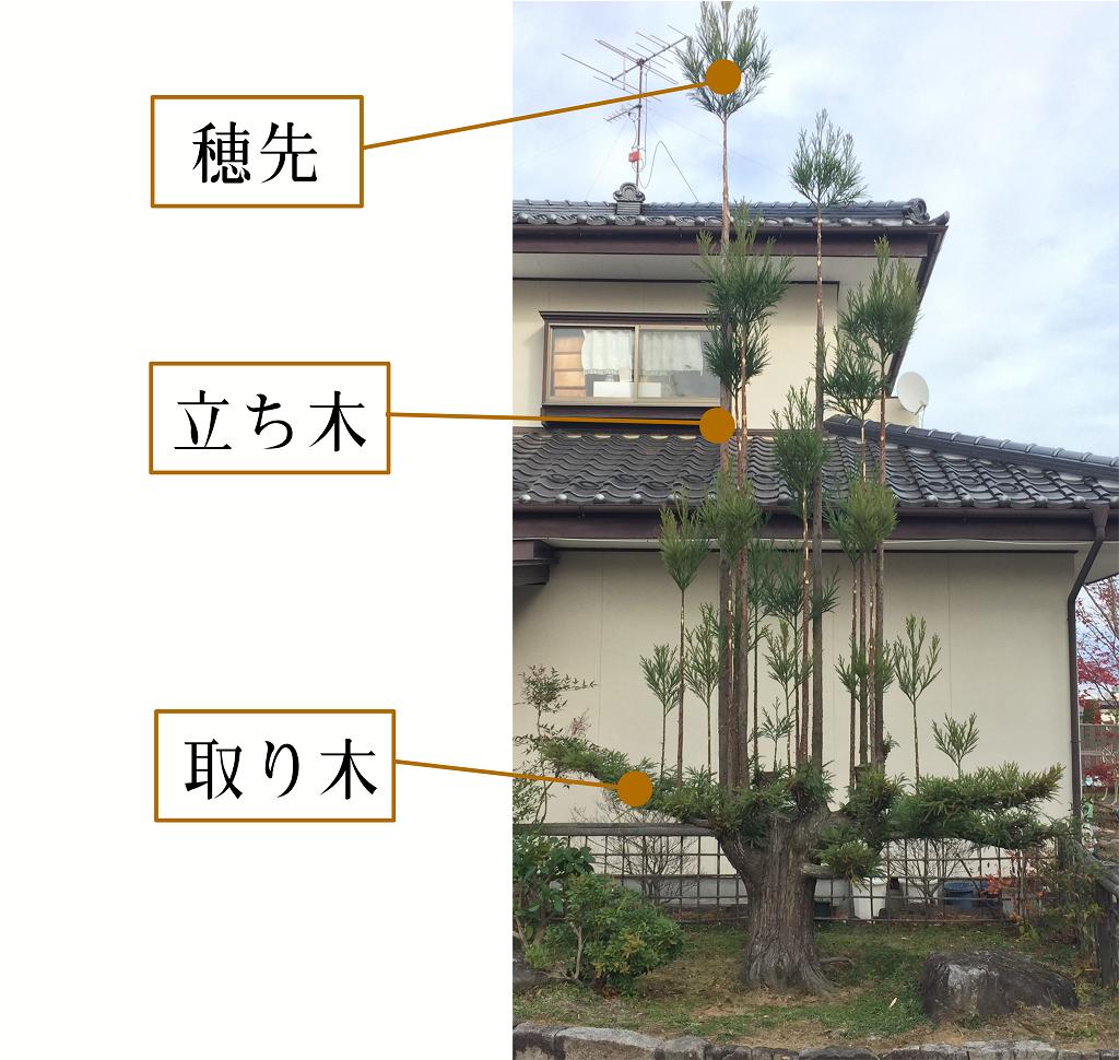 daishugi-illustration-nagano