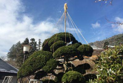 枝吊り作業