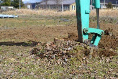 果樹の根の掘り起こし(伐根)