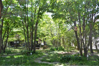 開放的な雑木の庭