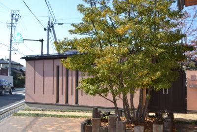 庭木(植木)としてのソヨゴの魅力