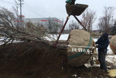 お庭における土壌・水捌けの重要性