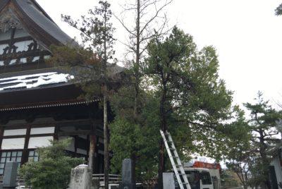 お寺の木の伐採