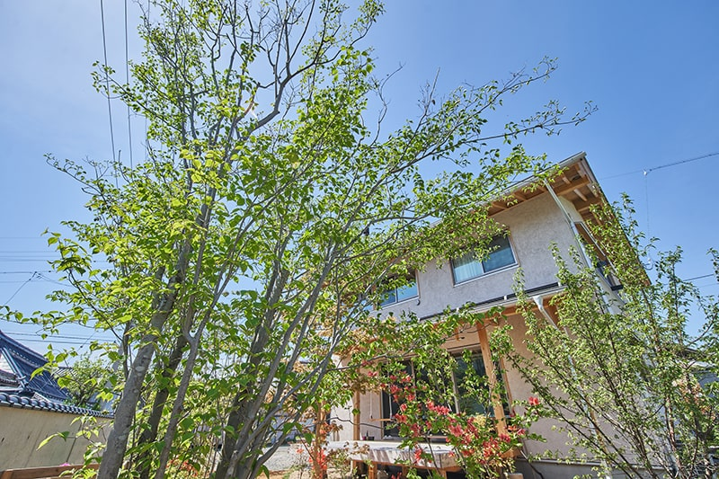 ウッドデッキに合う常緑樹が映えるお庭